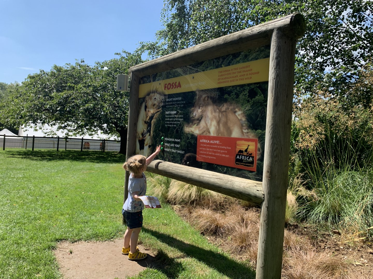M presses buttons on the Fossa information display at Africa Alive.