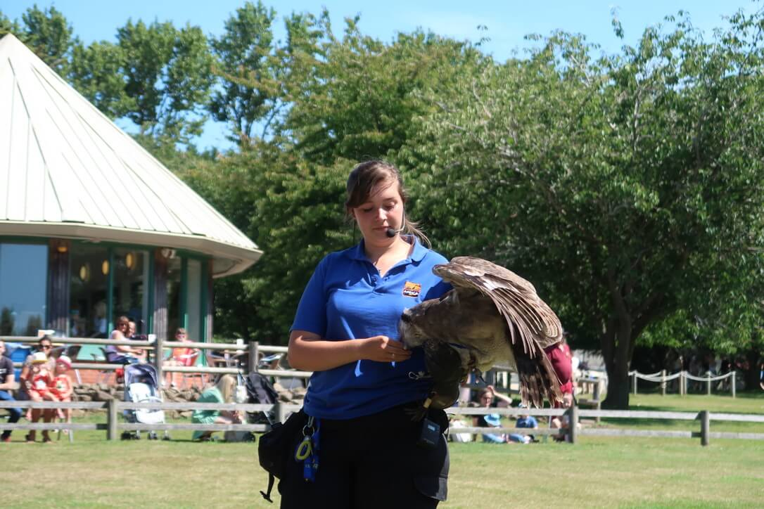 An eagle owl sits on the keeper's left forearm and takes food from her right hand at the Africa Alive Amazing African Animals display.