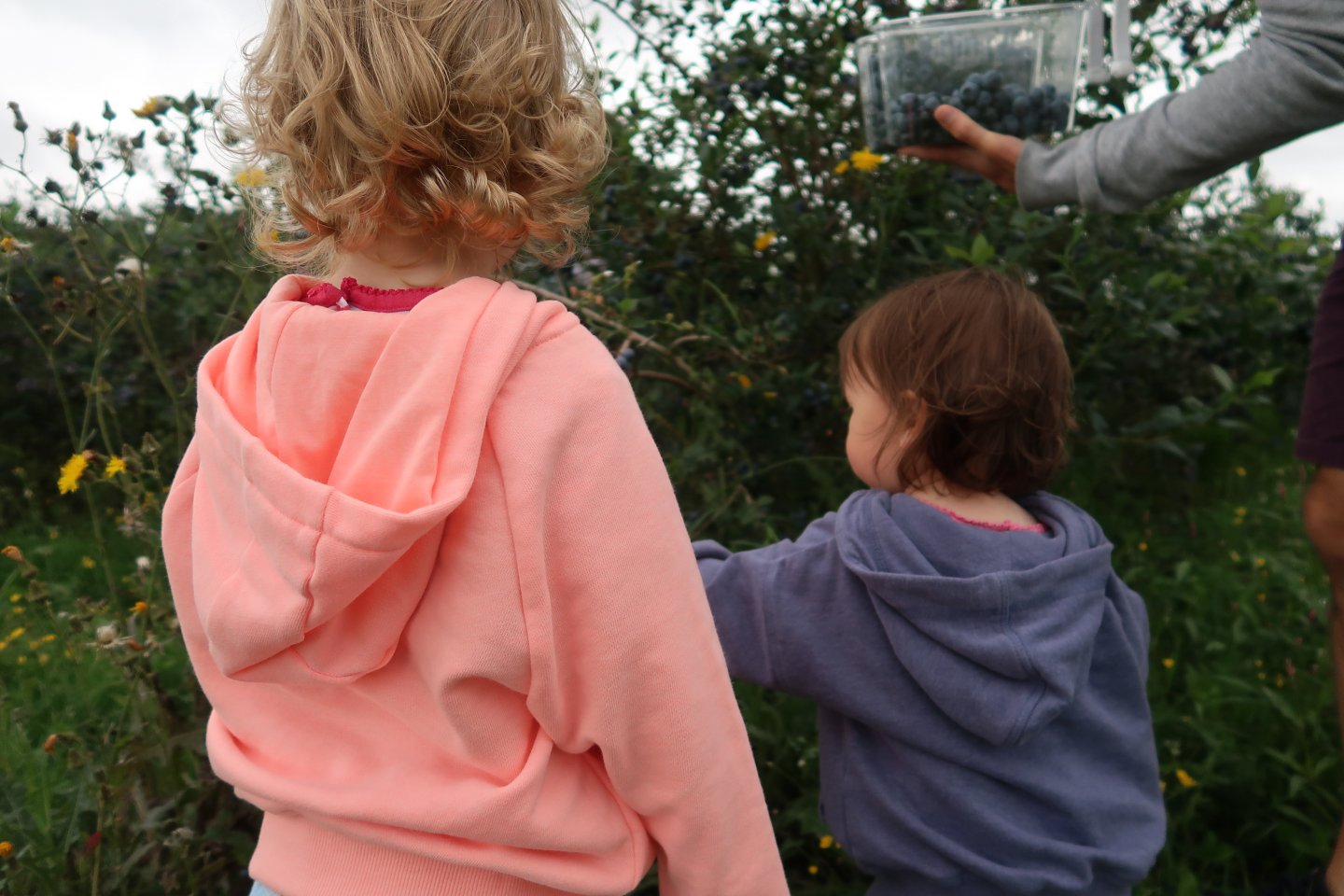 M and B pick blueberries from a bush, facing away from the camera.