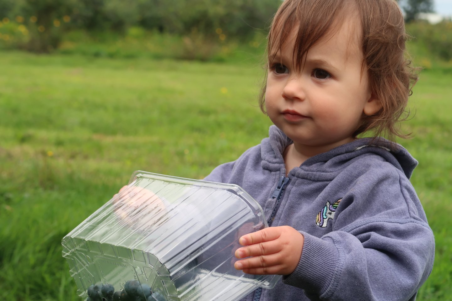 B, our one year old daughter, holding a punnet with a few blueberries in the bottom.