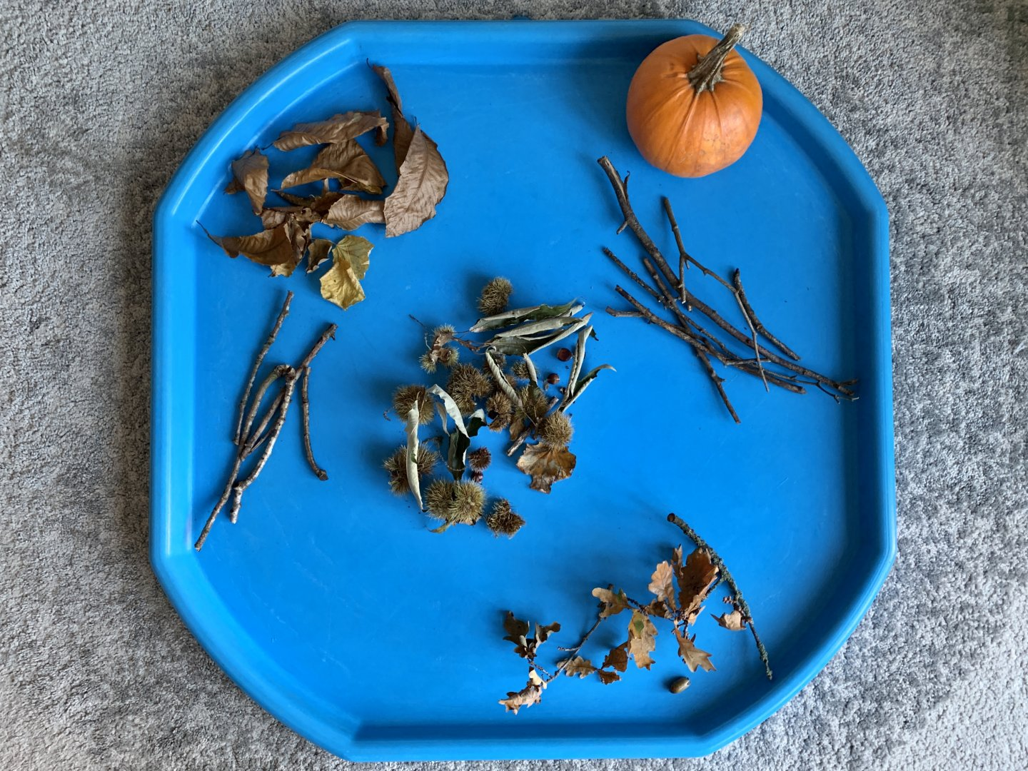 Autumn exploration set up - a bird's eye view of the tuff spot. Clockwise from top right: A pumpkin, a collection of sticks, some oak leaves attached to twigs, more sticks, a collection of brown leaves. Sweet chestnut leaves, cases and nuts are in the centre.