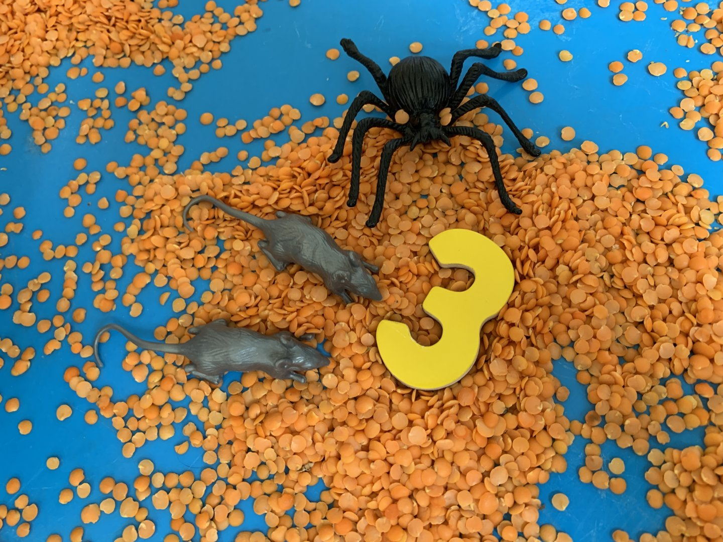 Halloween sensory number tuff spot - a wooden number three on a bed of red split lentils, surrounded by two plastic rats and a plastic spider.