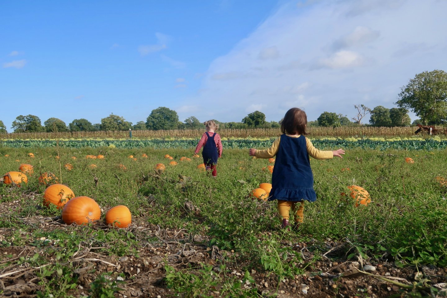 M and B walking across the pumpkin field at Horstead.